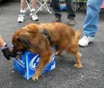Hond verdedigt bier