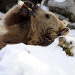 Beer drinkt bier