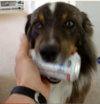 Hond Murdock haalt bier